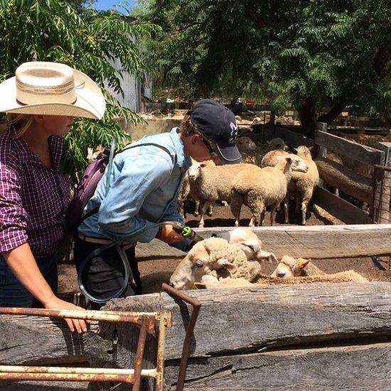 Trabajo de rancho remunerado