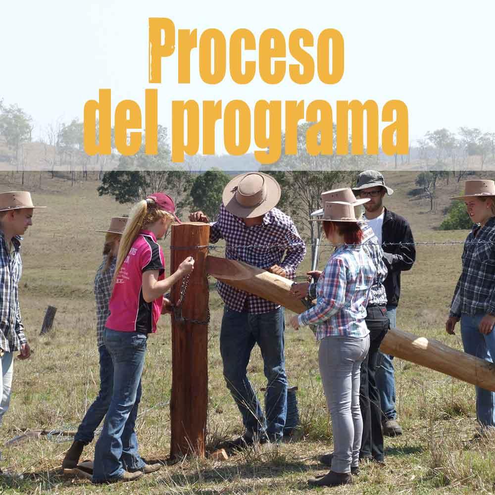 Proceso del programa
